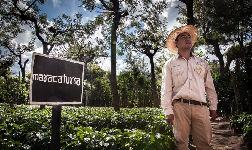 Explore a coffee farm during your IVHQ weekends in Guatemala