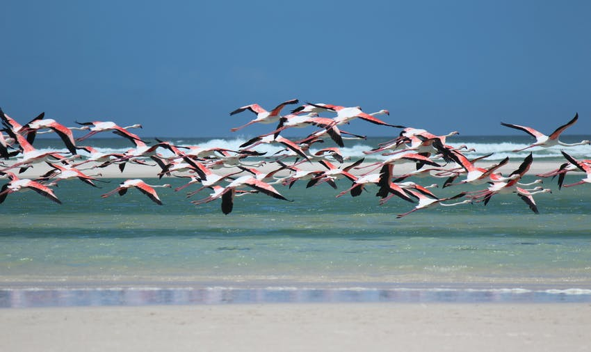 Check out the flamingos in Mexico
