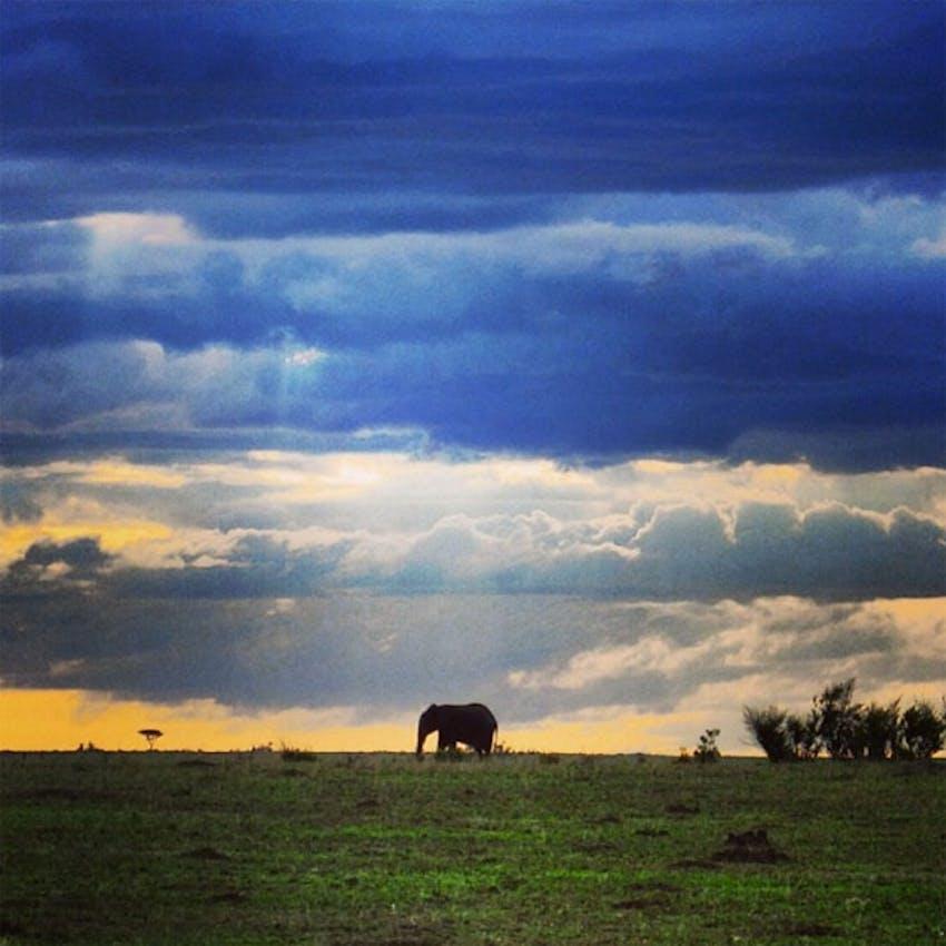 Visit the Maasai Mara as a volunteer in Kenya
