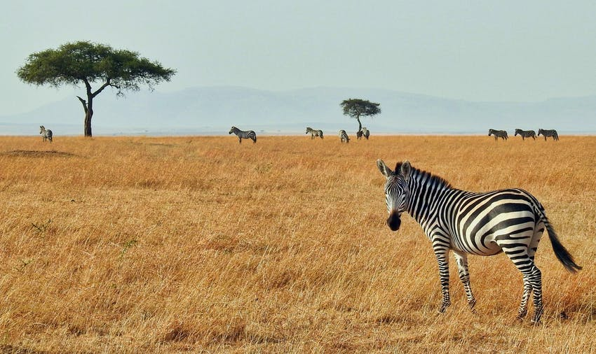 Visit the Maasai Mara as a volunteer in Kenya