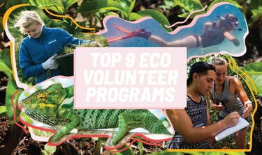Top 9 Eco Volunteer Programs with IVHQ
