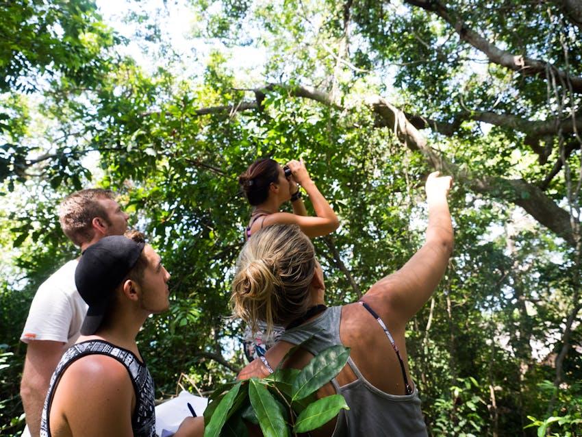 Environmental volunteering in Madagascar