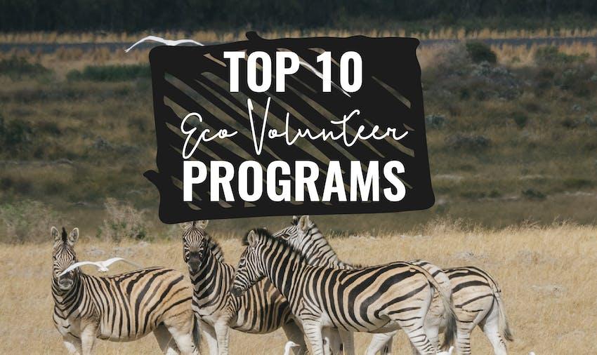 Top 10 Eco Volunteer Programs