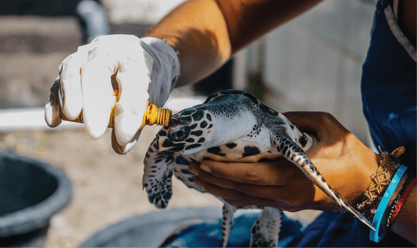 Adventure holiday with IVHQ as a turtle conservation volunteer in Bali
