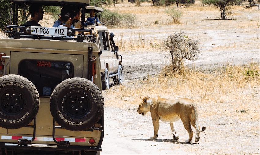 Wildlife adventure holiday with IVHQ in Africa