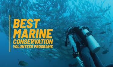 Best Marine Conservation Volunteer Programs