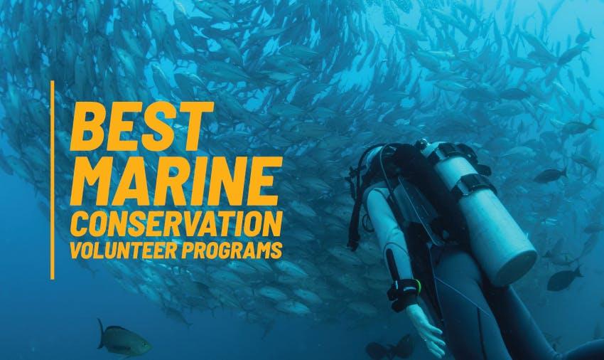 Best Marine Conservation Volunteer Programs