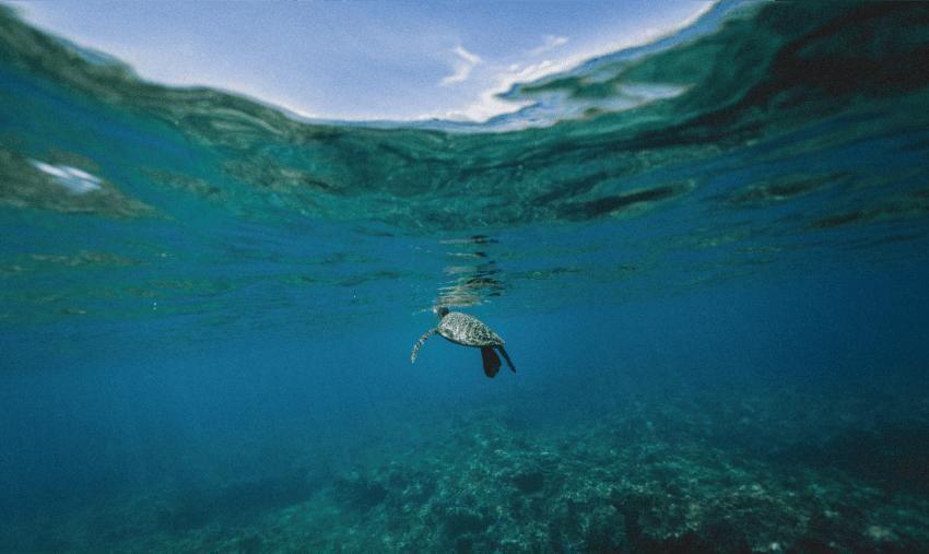 Marine Conservation Volunteering in Costa Rica