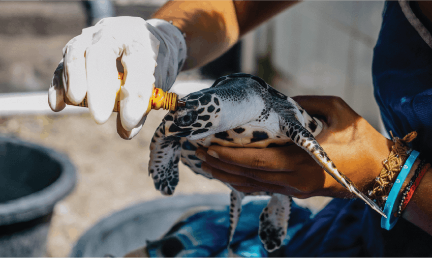 Marine Conservation Volunteering with sea turtles in Guatemala
