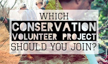 Which Conservation Volunteer Project Should You Join with IVHQ?