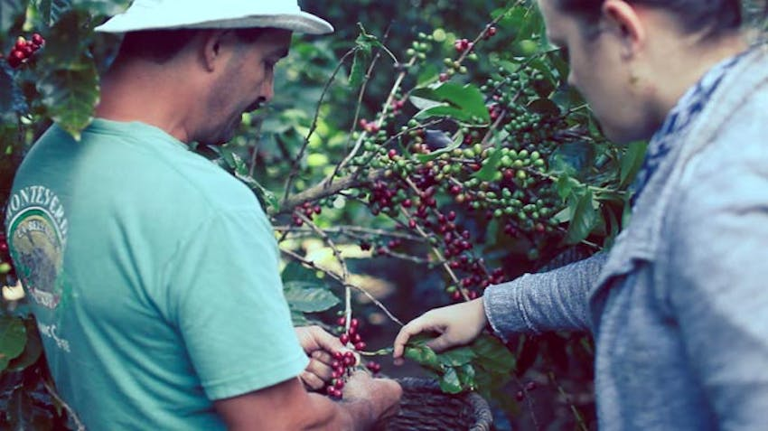 Eco Ag project in Costa Rica with IVHQ