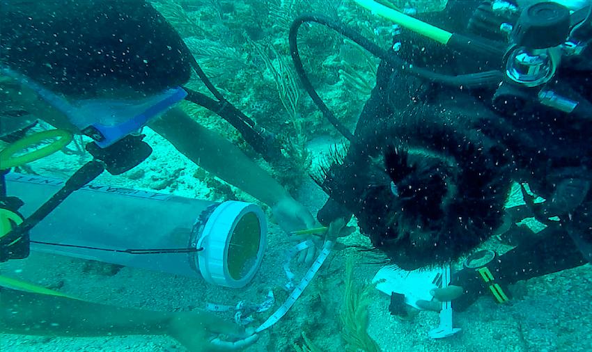 belize-scuba-measurement