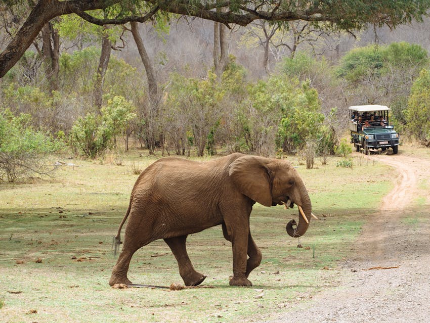 Affordable volunteer vacations with animals