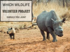 Which Wildlife Volunteer Project Should You Join?
