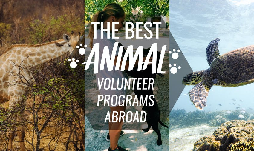 The best animal volunteer projects abroad