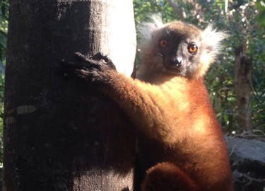 The Land of Lemurs
