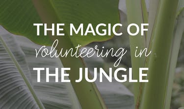 The Magic Of Volunteering In The Jungle