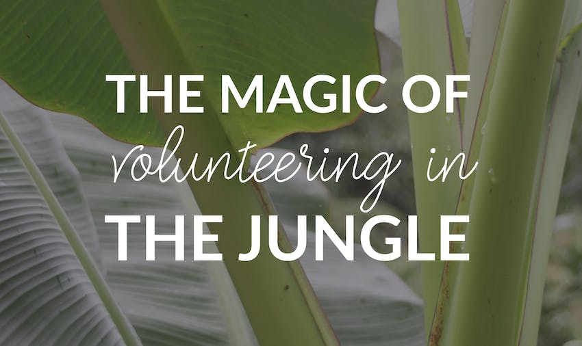 IVHQer travel blogger explains volunteering in Peru on the Jungle Conservation project
