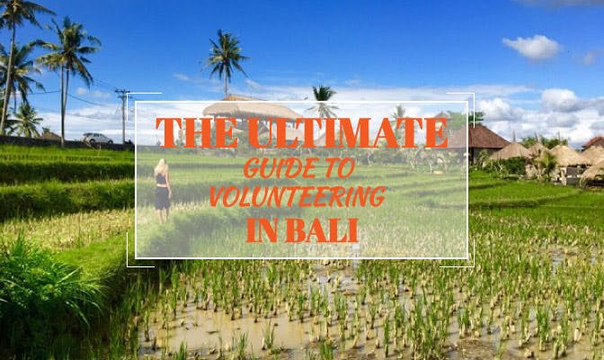 The Ultimate Guide To Volunteering In Bali