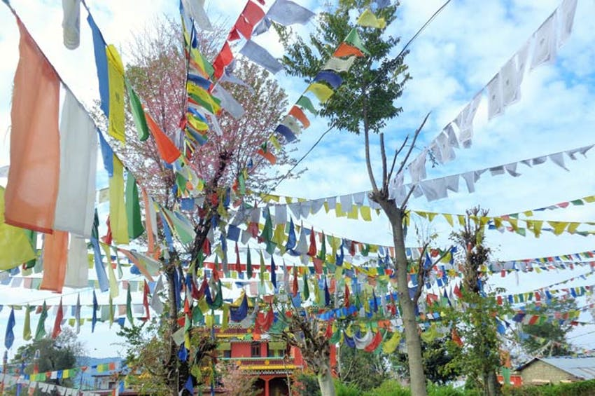 Tibetan culture in india with IVHQ