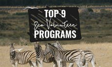 Top 10 Eco Volunteer Programs with IVHQ