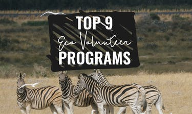 Top 10 Eco Volunteer Programs with IVHQ