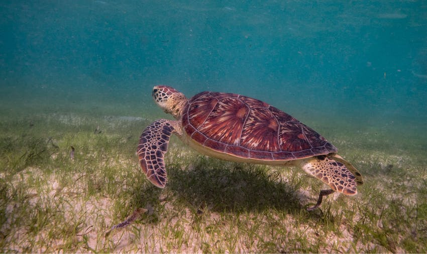 Sea turtle volunteer vacations in Costa Rica, Guatemala and Bali