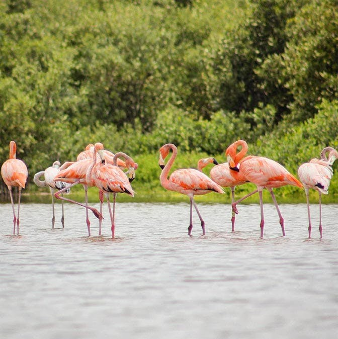 Visit the Celestun Flamingo Reserve as a volunteer in Mexico with IVHQ