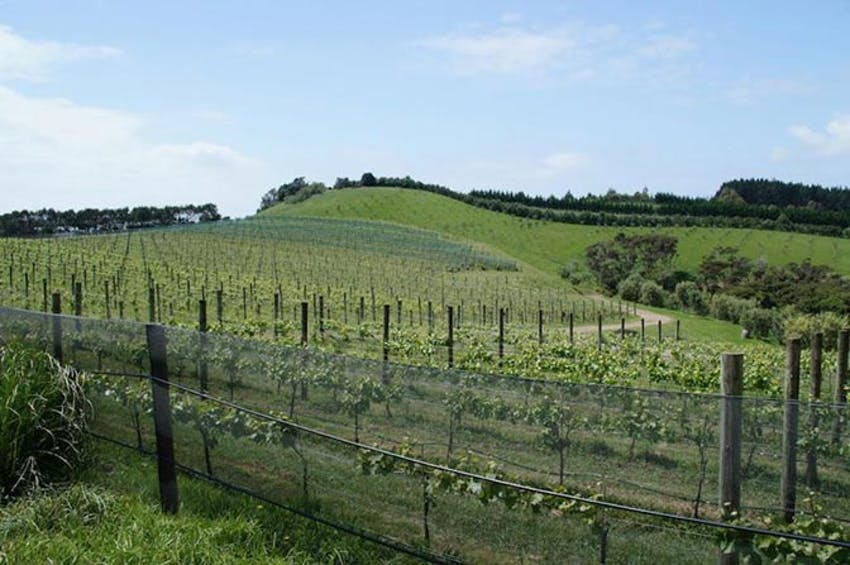 Visit a New Zealand Winery as an IVHQ volunteer