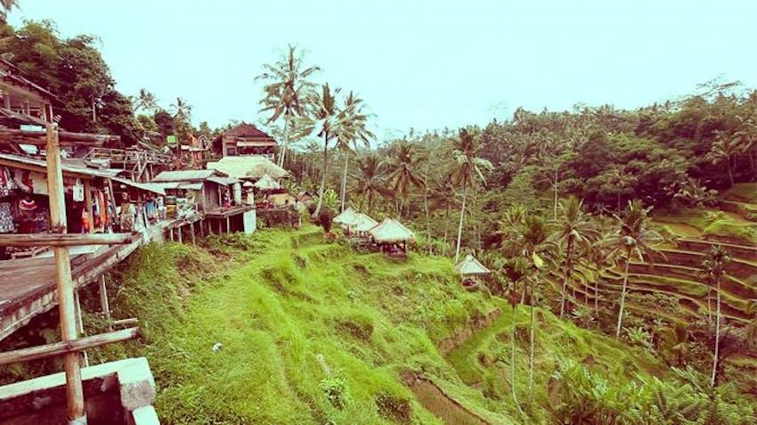 Volunteer Abroad Programs 2015 in Bali