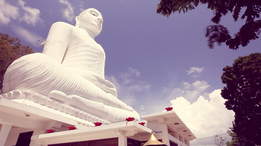 Volunteer and study abroad in Sri Lanka with IVHQ