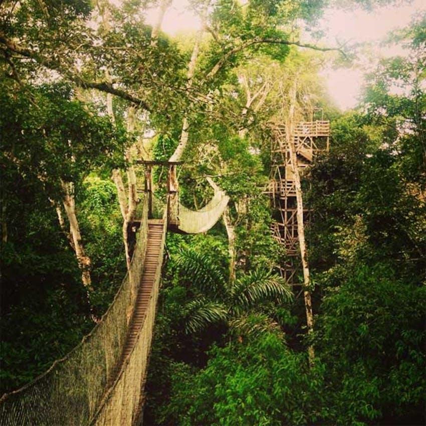 A look inside the jungle as an IVHQ volunteer in Peru