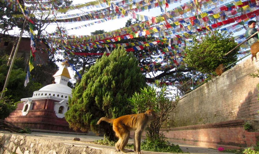 Arriving in Nepal as an IVHQ volunteer