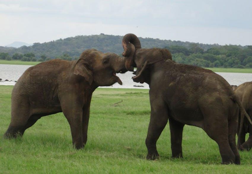 Visiting Elephants during the weekends as an IVHQ volunteer in Sri Lanka