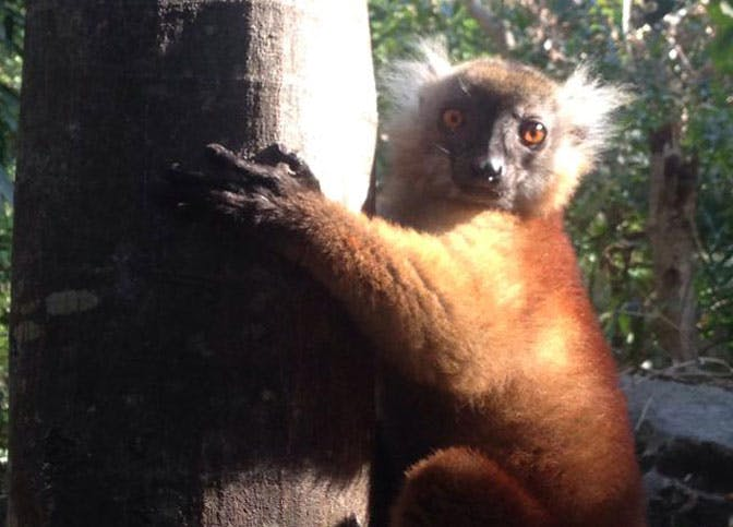 Volunteering in the land of the Lemurs - Madagascar!