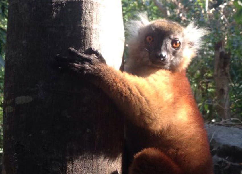 Volunteer in froest conservation with IVHQ in Madagascar