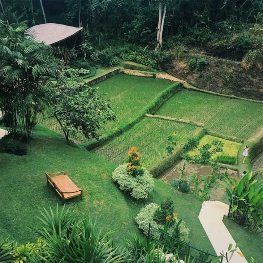 Visit the rice fields of Bali with IVHQ during your weekends