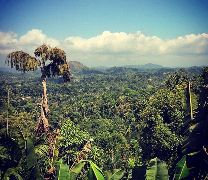 Volunteering in Sri Lanka with IVHQ