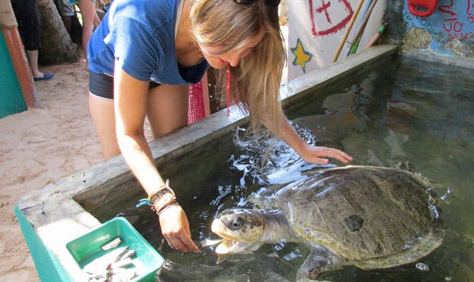 Volunteering with turtles in Sri Lanka with IVHQ