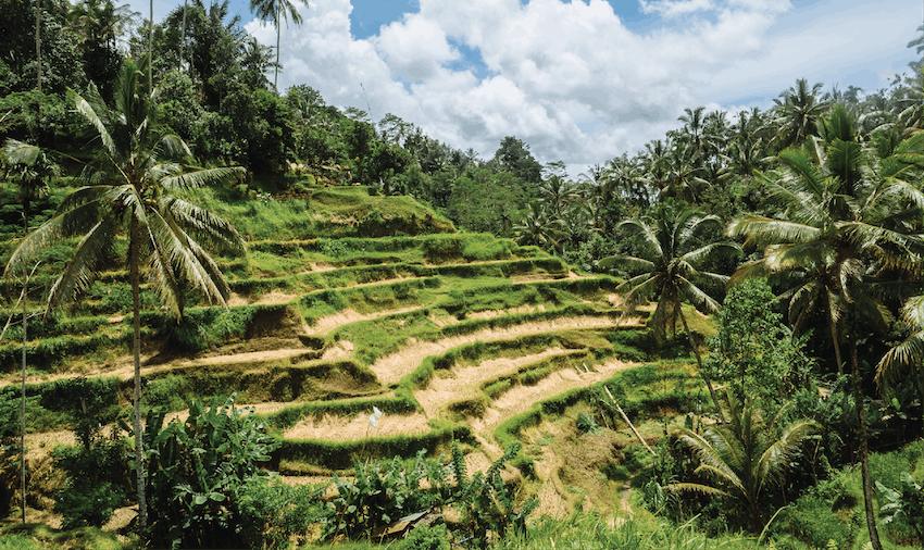 Volunteering Asia: volunteering in Bali - Ubud with IVHQ