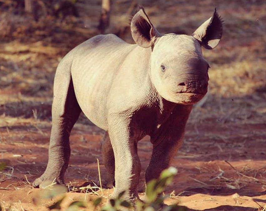 Wildlife conservation volunteer abroad IVHQ