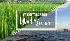 Which to choose when volunteering in Bali: Ubud vs Lovina