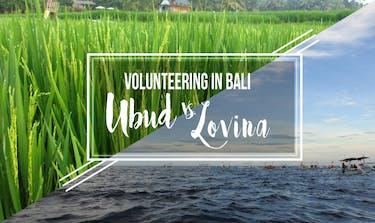 Which to choose when volunteering in Bali: Ubud vs Lovina