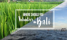 Where You Should Volunteer In Bali with IVHQ?
