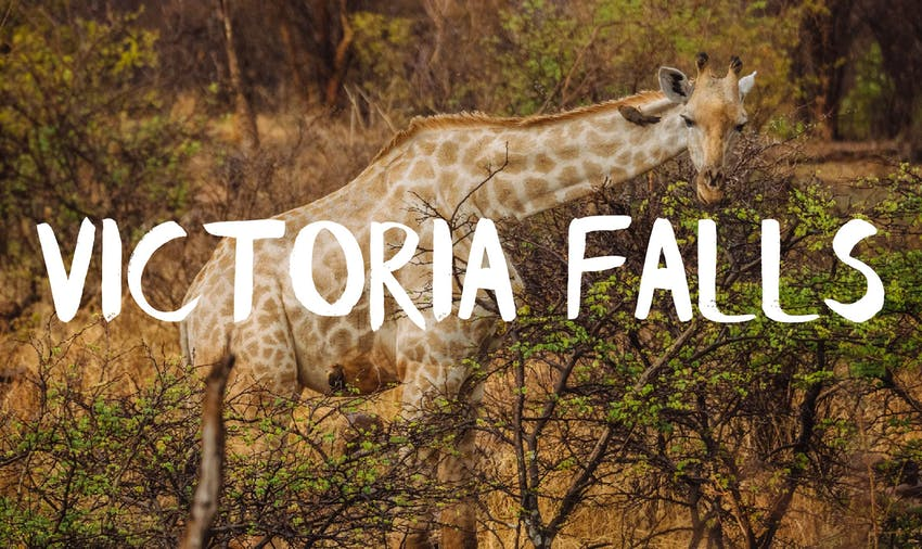 Volunteer in Victoria Falls with IVHQ