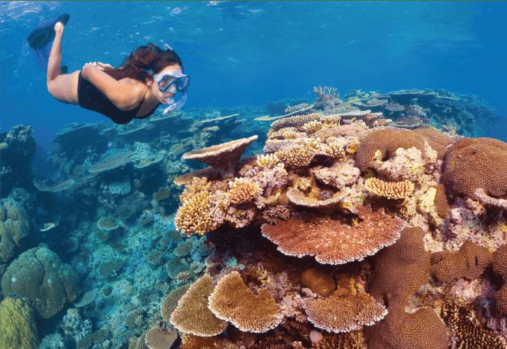 Great Barrier Reef Conservation Volunteer Program Ivhq
