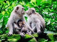 Visit Monkey Forest in Ubud, Bali with IVHQ
