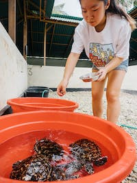 IVHQ Turtle Conservation volunteer in Nusa Penida, Bali