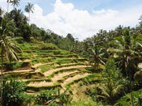 Explore Rice Terraces in Bali with IVHQ