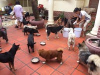 Volunteer in Animal Care in Cambodia with IVHQ